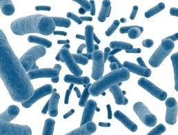 Stoelgang & Probiotica